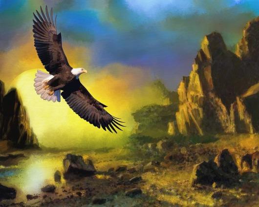 eagle-772480_1280